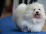 MARS THE SWEETEST COTON
